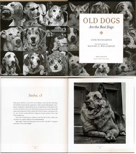 old dogs_2.jpg