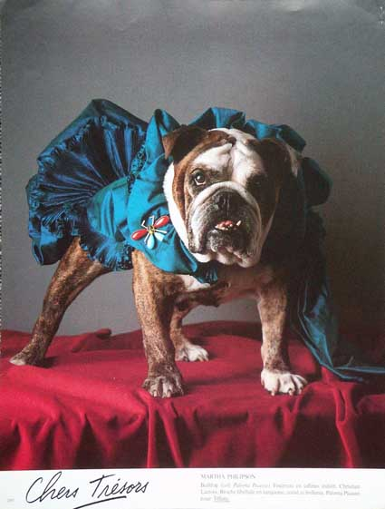 vogue_bulldog.jpg